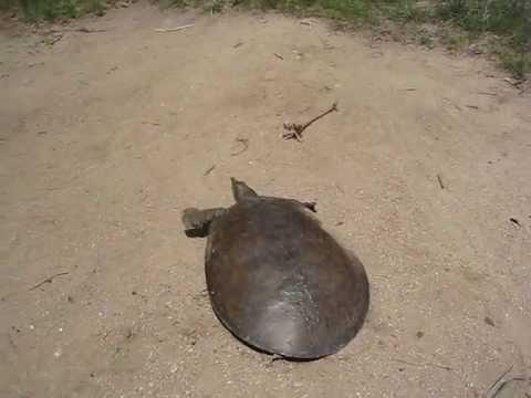 Брза желка?!