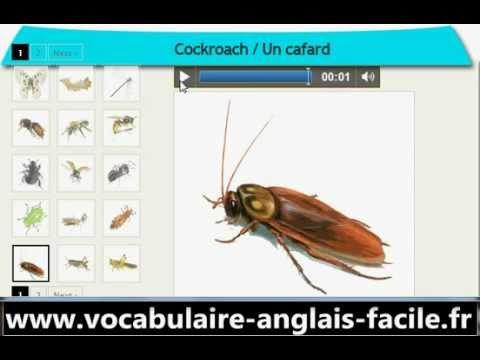 vocabulaire anglais les insectes vocabulaire facile anglais youtube. Black Bedroom Furniture Sets. Home Design Ideas