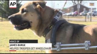 AP - Paralyzed Indiana Dog Gets Wheelchair