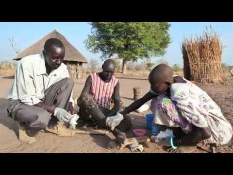Fighting On: The War Against Guinea Worm in Southern Sudan