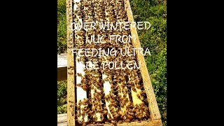 Beekeepers This Is Why You Feed Ultra Bee Pollen In Winter