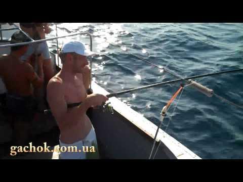 Ловля ставриды на самодур на Черном море