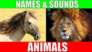 Image of: Deadly Animal Names And Sounds For Kids Video Compilation Learn Animal Names For Children Toddlers Youtube Learn Alphabet With Cartoon Real Animals For Children Abc Wild