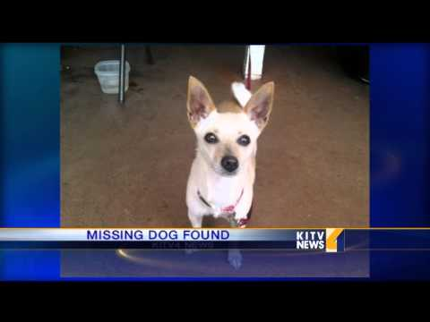 Lost Dog Found By Good Samaritan - Smashpipe News