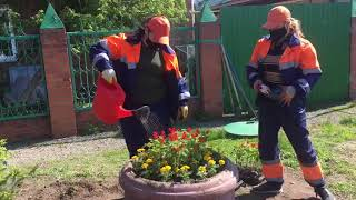 Под окнами 95-летнего ветерана ВОВ Анатолия Пулковского накануне 9-го мая высадили цветы