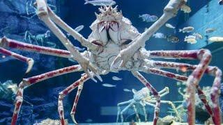 Top 10 Scariest Giant Creatures
