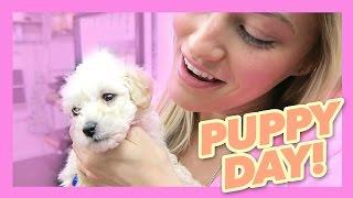 Cutest puppy video ever!   iJustine