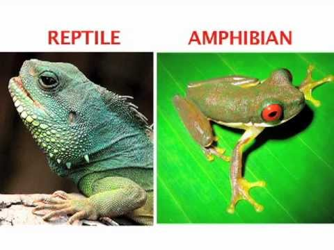 Difference Between Salamander and Lizard