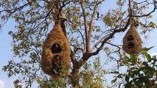 House Animal Nests Flower Grass   Primitive technology , Building Skill