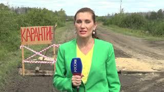 В трёх районах Омской области введён карантин по птичьему гриппу