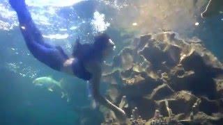 Nàng tiên cá xinh đẹp tại thủy cung Vinpearl Hà Nội