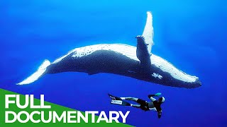 Adventure Ocean Quest: The Giants of Rurutu | Free Documentary Nature