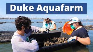 Duke AquaFarm video