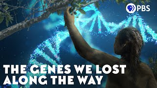 The Genes We Lost Along the Way
