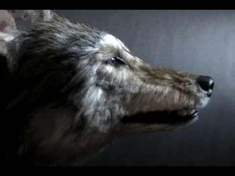 Animatronic Canadian Wolf Youtube