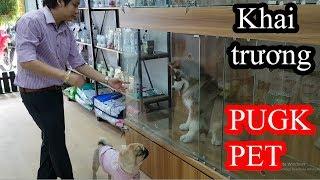 PUGK PET khai trương - Dẫn Pug Bư với Alaska Sam ra shop chơi tụi nó quậy banh nóc =))