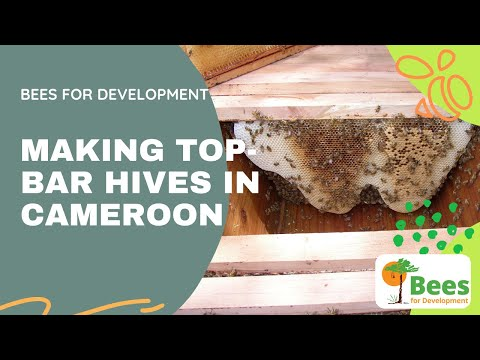 Bees and Trees Project in Nkor, Cameroon - Introducing The Top Bar Hive