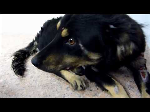 Homeless Dog Transformation A Happy Ending Story That