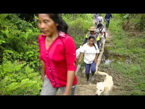 Proyecto de Reforestación Colombia 2015-2017
