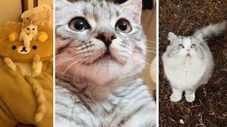 When Cats Have Nothing To Do - Funny Meow Meow #30