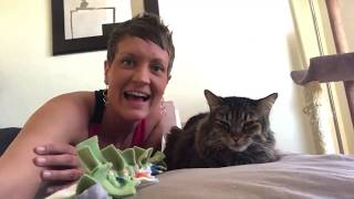Cats Going From Friends To Foes | Two Crazy Cat Ladies