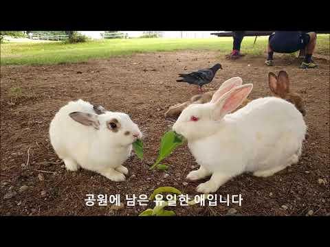 공원에 토끼가 산다 (1) - 올림픽공원 토끼들 (2018.09 현재)