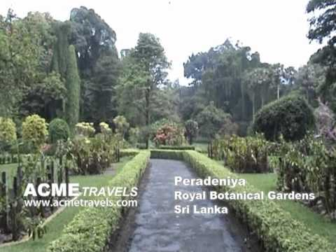 Peradeniya Sri Lanka Acme Travels