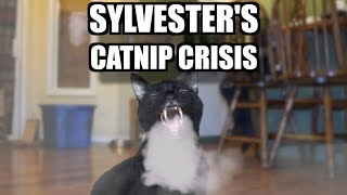 Sylvester's Catnip Crisis