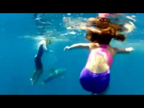 Swimming and Playing with Wild Dolphin Video