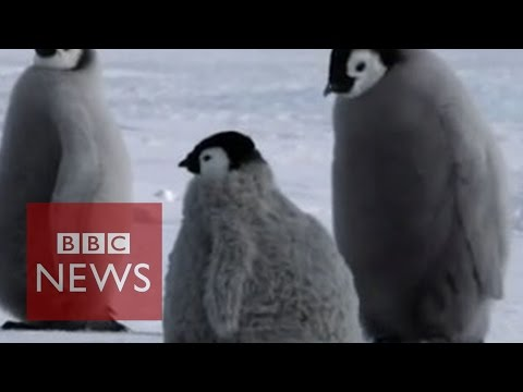 Fake penguin helps researchers