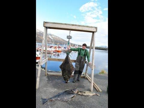 Рыбалка в Норвегии Торсваг . палтус 45кг