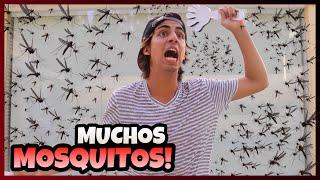 Daniel El Travieso - Los Mosquitos Invadieron Mi Casa.