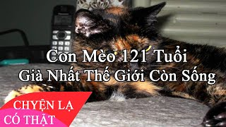 /chuyen la co that con meo 121 tuoi gia nhat the gioi con song
