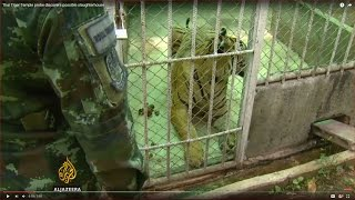 Thai Tiger Temple probe discovers possible slaughterhouse..