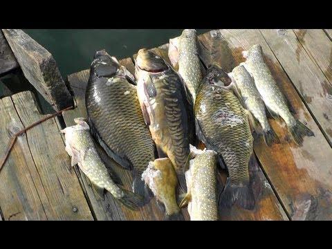 Как сохранить рыбу в жару