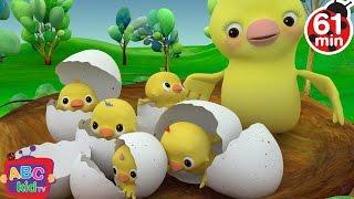 Five Little Birds   + More Nursery Rhymes & Kids Songs - ABCkidTV