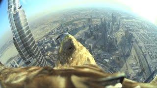 鷲の視点で見るドバイ