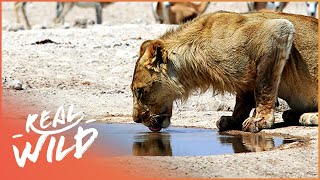 /makadikgadi wild animals of botswana predators and preys documentary real wild