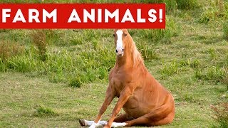 The Funniest Farm Animals Home Video Bloopers of 2017 Weekly Compilation | Funny Pet Videos