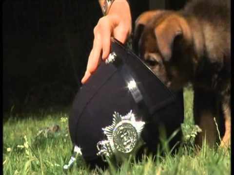 Police puppy training