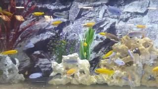 Assorted malawi / tropical fish + stunning aquarium جوا نترین ماسی