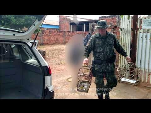 Polícia Ambiental faz nova operação na região de Marília