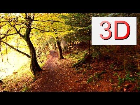 Ultra HD 3D Film: SEPTEMBER FOREST WALK (4K Resolution)