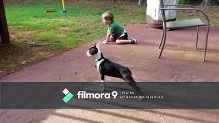 COMPILATION VIDEO - 2 MIN OF RANDOM FUNNY/FAIL DOGS