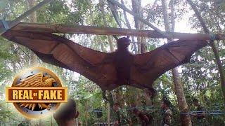 WORLD'S BIGGEST BAT CAPTURED - real or fake