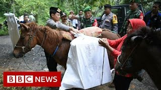Horses take ballot boxes to Indonesian villages - BBC News - YouTube
