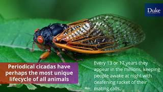 Incredible Insects! video