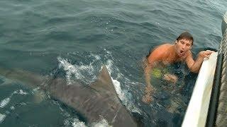 イタチザメに襲われそうになる男
