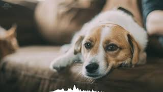 1 hour Sleep and relax Music For Dogs, Cats & All Pets, Stress Relief, Anxiety Healing Music 0045