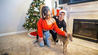 SURPRISING MY WIFE WITH A BABY REINDEER!